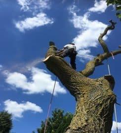 ARB UK – Tree Surgeons Oxford
