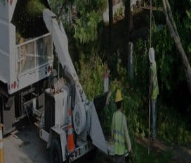 Visalia Tree Service Pros