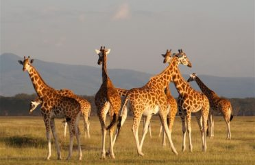 Malazi Safaris – Best Holidays Packages and Safaris in Nairobi