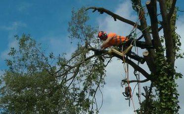 T&T tree service