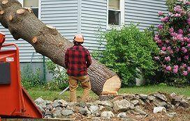 Quincy Tree Service
