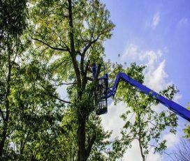 Pros da árvore de Lowell