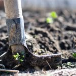 Things To Avoid When Applying Mulch On Your Garden