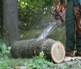 Keller Tree Service Pros