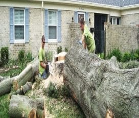 Caboolture Tree Removal