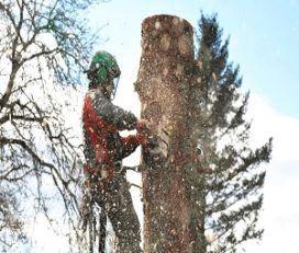 Tree Service Little Rock Pros