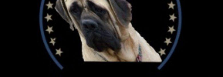 Englischer Mastiff 4U