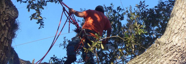 Sarasota Tree Service