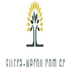 Filtra Nerou