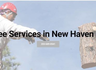 Tree Services New Haven