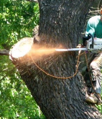 A Pinellas fa lerakója