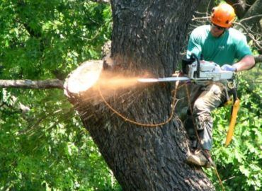 The Tree Feller of Pinellas