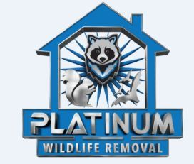 Platinum Raccoon Removal