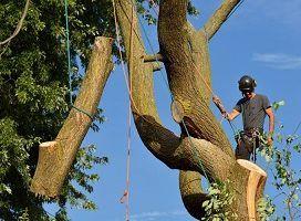 Woodstock GA Tree Removal