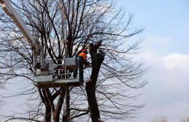 JACKSON TREE SERVICE PROS