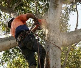 Grace Tree Service West Chester