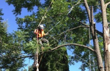 Alexandria Tree Services Unlimited