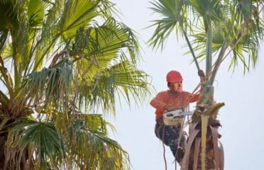 Rochester Tree Service Pros