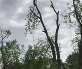 Panhandle Tree Service Pensacola
