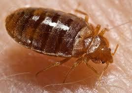 EcoFusion Pest Control & Bed bug extermination