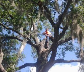 Lindbergh's Tree Service Greensboro