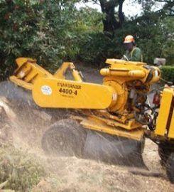 Discount Tree Service Bronx