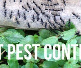Antipesto Pest Control