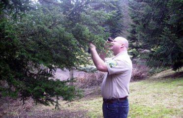 Top Austin Tree Service