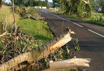 Texas Shade Tree Service