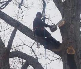 Owensboro Tree Service