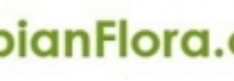 Flowers delivery in Saudi Arabia