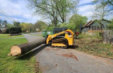 Tree Service Canton