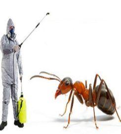 Ann Arbor Pest Control