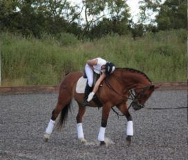 Position Perfect Equestrian