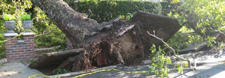Macon Tree Pro Service