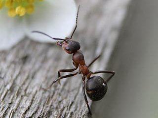 Pest Doctors