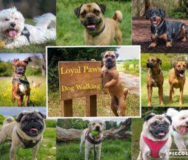 Loyal Paws Pet Service