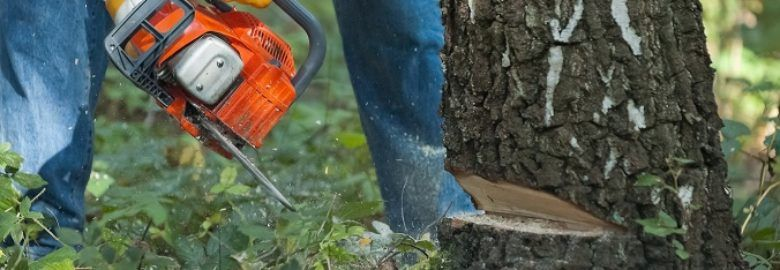 Tree Service Columbus Pro's
