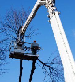 Columbus GA Tree Pros