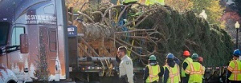 Encinitas Tree Removal Co.