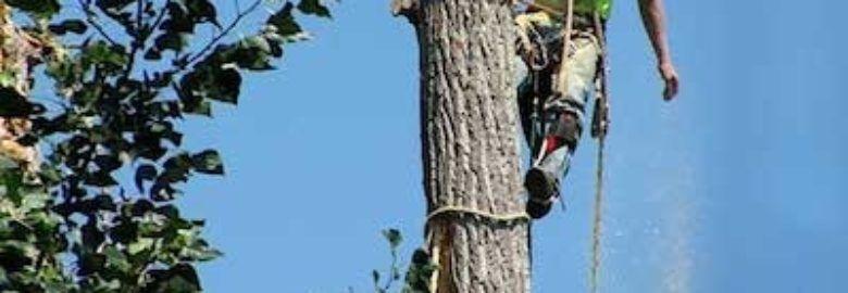 Thornapple Tree Service Wyoming