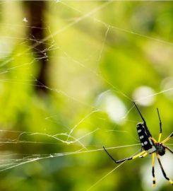 Santee Pest Control Company