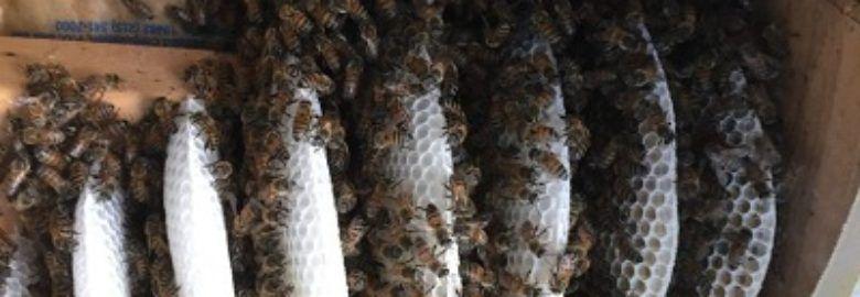 Stung and Sticky Beekeeper, LLC