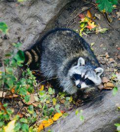 WXT Wildlife Removal of Austin