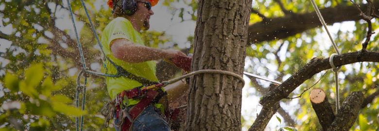 Tree Service Bronx – Cutting & Removal Company