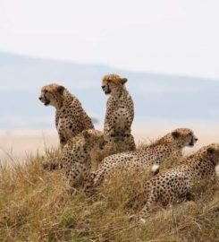 Budget Holiday Safaris