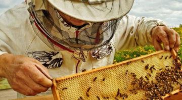 Buzzing Bee