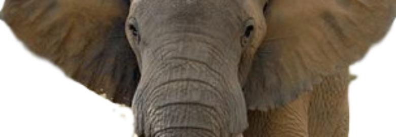 3 Elephants Antiques Arcade