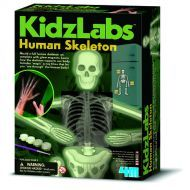4M - Human Skeleton