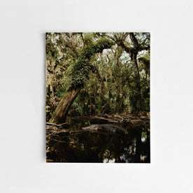 The Flooded Oak Hammock by Corey Woosley: Featured Image